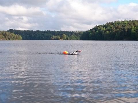 Simmar i Stora Delsjön inför Skatås sjöar